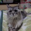 猫を飼う楽しみの話