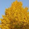 秋の葉の色