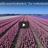 ドローンで上空から見たオランダの花畑に感動を隠せない