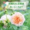 [兵庫]尼崎市に住むならどこがおすすめ?アマの良いところと生活環境を紹介