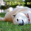 眠い、だるい、やる気が出ないのはなぜ?病気なの!?