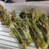 たらの芽は、とげの下処理をしないでサクッと揚げる。