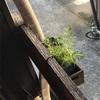 小さなお庭を作りました。