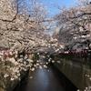 目黒川でお花見ランチ