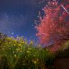 星景サルベージその63 春色の星