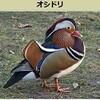 五木ひろしの歌「オシドリ」を福田こうへいさん歌う。