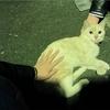 突如として現れた地域猫を観察する【5月5日~5月11日】