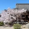 2019年春。西大寺のソメイヨシノもそろそろおしまいかな。