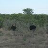 南部アフリカの野鳥たち