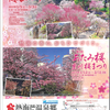 日本一早い梅まつり、第75回熱海梅園梅まつりはいよいよ本番!