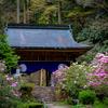 京都・雲ケ畑 - 石楠花咲く古刹 春の志明院