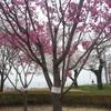 壬生町東雲公園20180402