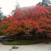 秋の糸島の超人気スポット雷山千如寺を待ち時間なしで見るたった1つの方法