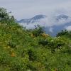 2021年白山高山植物園(その2)