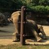 上野動物園で見たハズバンダリートレーニング
