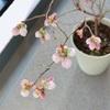 春のはじまりはじまり