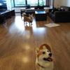 犬と一緒に泊まれるホテル 狗賓(2) お部屋編(感想ブログ)