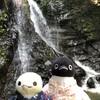 ペンギンも滝に打たれたい?行者の滝でひんやりモードです(夏の犬鳴山編その2)(243)