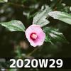 週報 2020W29
