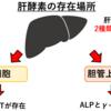 『肝酵素①:ASTとALT』~血液検査を考える~