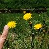 花と指 その拾参