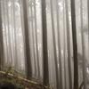 霧氷バスで行く三峰山