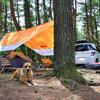 樹海でカヤックデイキャンプ