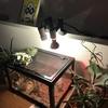 (娘の)カナヘビの飼育記録pt2(ランプの取り付け)