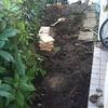 北の庭レンガ敷き作成記録