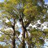 散歩で見かけた立派な木