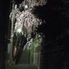 妙見坂のしだれ桜 2018