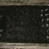 黒ニンジン・黄色い人参・オレンジ色人参・葱・茎ブロッコリーの成長記録1