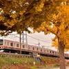武蔵野線と黄葉を出羽公園で撮影しました
