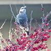 餌を求めて、野鳥がオンパレード…。