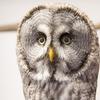Powl 2択の簡単アンケートアプリ!稼げる?