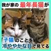 我が家の【最年長猫】が【子猫たち】のことを冷やかな目で見てる!(動画あり)