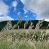 仙石原の美しいススキ草原【箱根】