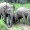 スリランカ旅行8日目・フルルエコパーク