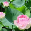 (有)蓮や鈴木造園の日記