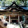 いつかそこに行こう。愛犬の思い出を連れて。~オオカミに守られている場所、三峯神社~
