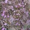 春の低地山野草 1