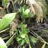 「マダム倶楽部」活動報告 我が家の庭に咲きだした花と、さっくりウォーキング♪ 2月5日