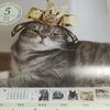 猫カレンダーに掲載されたい! 人気の猫カレンダー応募先まとめ。