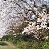 かっこいい『桜ソング』といえば『いきものがかり:花は桜 君は美し』でしょ!?