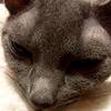 【リンパ腫】2月19日 昼 覚悟なんて ~レスキュー2回目(10/26)~