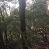 樹種転換を試みる〜試験地について2〜