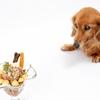 人間も犬も腸内環境の改善は大事です!