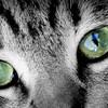 猫の目の色は環境によって変化する