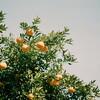 may be orange / Pentax SL