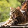【猫好き必見】招き猫も神様?猫の神様やルーツについて調べてみた